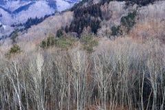 Bosque japonés en invierno Imagen de archivo