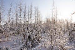 Bosque joven Foto de archivo