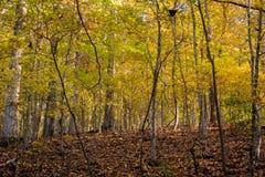 Bosque joven en caída Imagenes de archivo