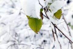 Bosque joven en invierno Foto de archivo