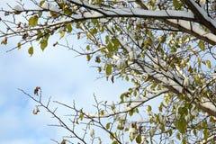 Bosque joven en invierno Imagen de archivo libre de regalías