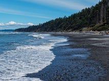 Bosque lateral del océano foto de archivo