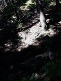 Bosque ligero Imagen de archivo