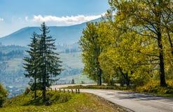 Bosque a lo largo del camino de la ladera el día soleado Foto de archivo libre de regalías
