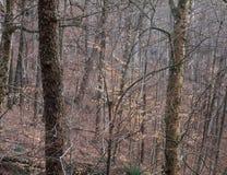 Bosque a lo largo del rastro de Gap del Trillium, parque nacional de Great Smoky Mountains, Tennessee fotografía de archivo