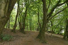 Bosque mágico foto de archivo