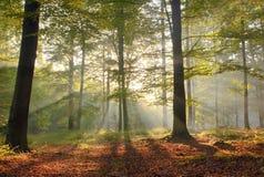 Bosque mágico fotos de archivo