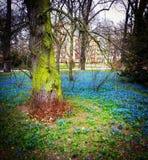 Bosque mágico foto de archivo libre de regalías
