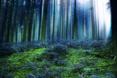 Bosque mágico azul del cuento de hadas con las luces Foto de archivo