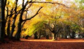 Bosque mágico caliente Fotos de archivo