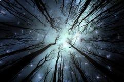 Bosque mágico con las estrellas en el cielo fotografía de archivo