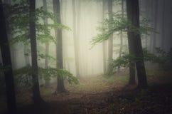 Bosque mágico con niebla misteriosa fotografía de archivo