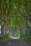 Bosque mágico de setos oscuros Fotos de archivo