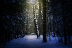 Bosque mágico del invierno, un cuento de hadas, misterio Fondo de Winer imagenes de archivo