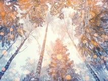 Bosque mágico del paisaje del invierno en helada de la nieve con la luz de la Navidad Imágenes de archivo libres de regalías