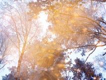 Bosque mágico del paisaje del invierno en helada de la nieve con la luz de la Navidad Fotos de archivo