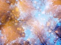 Bosque mágico del paisaje del invierno en helada de la nieve con la luz de la Navidad Foto de archivo libre de regalías