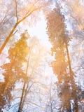Bosque mágico del paisaje del invierno en helada de la nieve con la luz de la Navidad Imagen de archivo libre de regalías