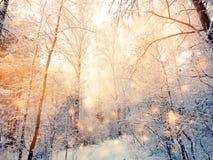 Bosque mágico del paisaje del invierno en helada de la nieve con la luz de la Navidad Fotos de archivo libres de regalías