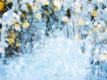 Bosque mágico del paisaje del invierno en helada de la nieve con la luz de la Navidad Fotografía de archivo libre de regalías