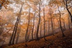 Bosque mágico en la niebla Fotos de archivo