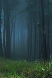 Bosque místico imagen de archivo