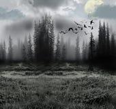 Bosque místico Imagen de archivo libre de regalías
