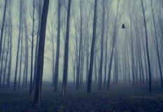 Bosque místico al día de niebla foto de archivo libre de regalías