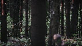 Bosque místico en el tiempo de la puesta del sol almacen de video