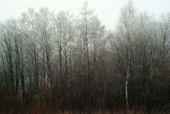 Bosque maçante do inverno foto de stock royalty free