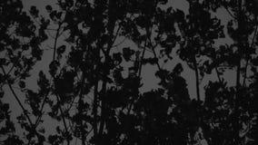 Bosque malvado fabuloso almacen de metraje de vídeo