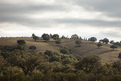 Bosque mediterráneo Fotografía de archivo libre de regalías