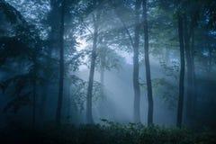 Bosque melancólico llenado de la luz oscuro fotos de archivo