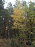 Bosque mezclado fotografía de archivo
