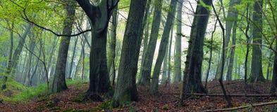 Bosque mezclado Imagen de archivo libre de regalías