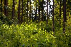 Bosque mezclado imágenes de archivo libres de regalías