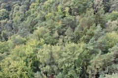 Bosque mezclado Foto de archivo libre de regalías