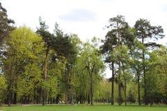 Bosque mezclado - con?fero y ?rboles de hojas caducas en el mismo bosque fotos de archivo libres de regalías