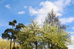 Bosque mezclado - con?fero y ?rboles de hojas caducas en el mismo bosque fotografía de archivo libre de regalías