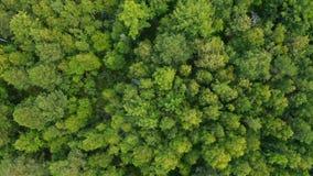 Bosque mezclado de Siberia en el verano almacen de metraje de vídeo