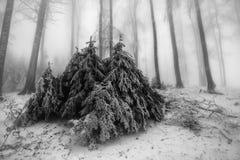 Bosque mezclado del invierno fotos de archivo