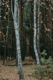 Bosque mezclado del otoño imagenes de archivo