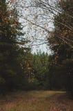 Bosque mezclado del otoño imagen de archivo libre de regalías