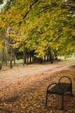 Bosque mezclado del otoño imagen de archivo