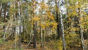 Bosque mezclado del otoño en tiempo soleado Imagen de archivo libre de regalías