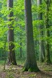 Bosque mezclado en el amanecer del verano Foto de archivo