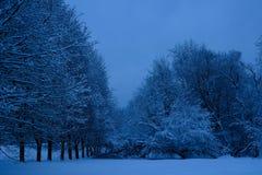 Bosque mezclado en el estado después de nevadas, Moscú, Rusia de Kolomenskoye Fotografía de archivo