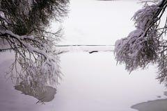 Bosque mezclado en el estado después de nevadas, Moscú, Rusia de Kolomenskoye Fotos de archivo libres de regalías