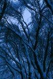 Bosque mezclado en el estado después de nevadas, Moscú, Rusia de Kolomenskoye Imagenes de archivo