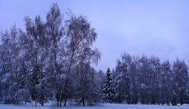 Bosque mezclado en el estado después de nevadas, Moscú, Rusia de Kolomenskoye Fotografía de archivo libre de regalías